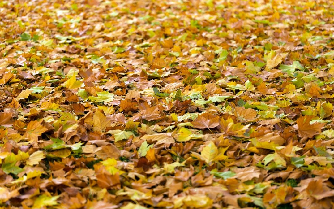 Protect Your HVAC Unit From Fallen Leaves